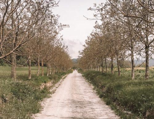 la via degli dèi: in cammino sugli Appennini da Firenze a Bologna o viceversa